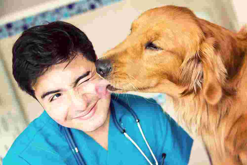 5 Things About Your Vet