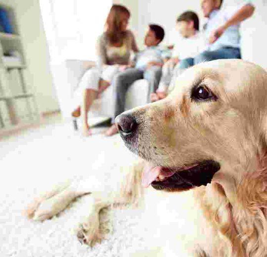 Fighting Pet Allergies